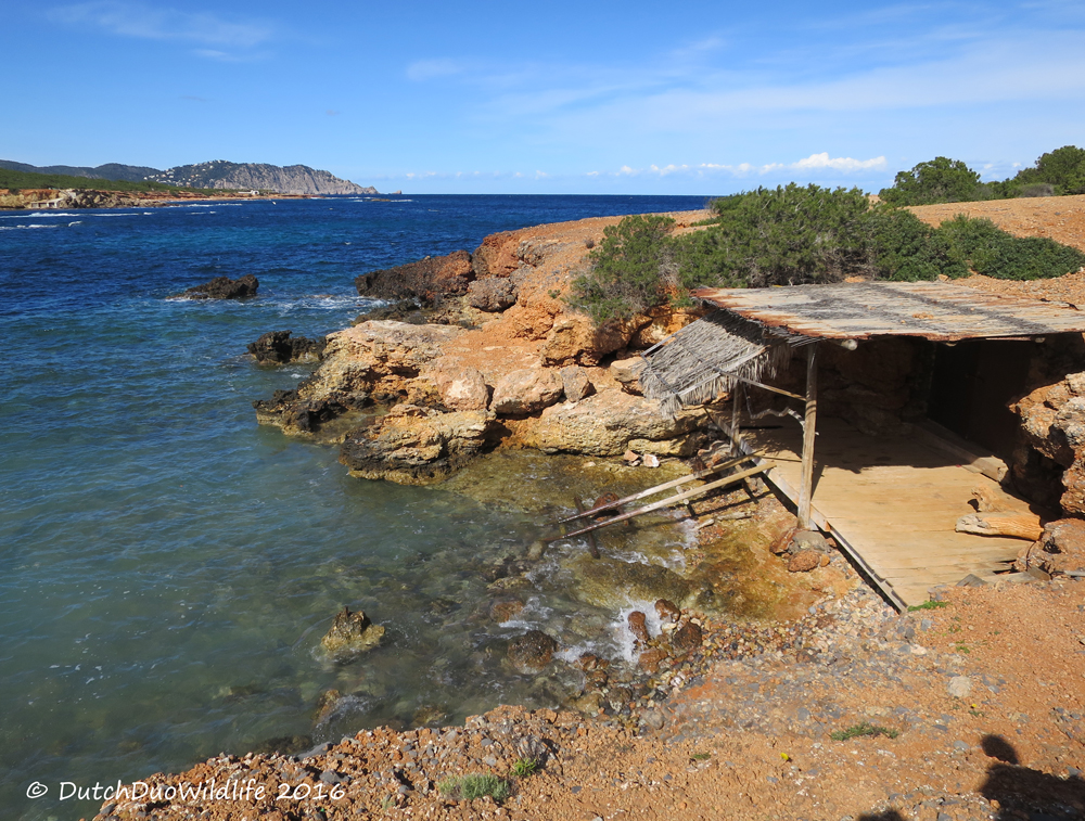 our big move to Ibiza Spain #ibiza2016 #ourbigmove beach  #hike #secret #hikes #walks #nature #ibiza
