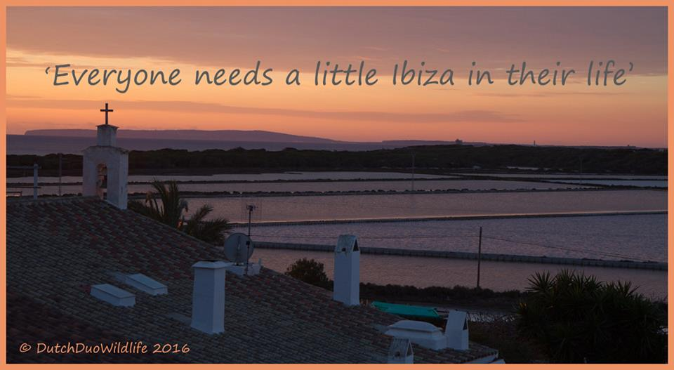 our big move to Ibiza Spain #ibiza2016 #ourbigmove las #salinas zoutvelden rental house Es Cavallet beach flamingo nature reserve La #Revista